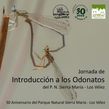 ¿Quieres conocer las libélulas del P.N. Sierra María-Los Vélez?